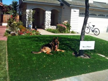 Artificial Grass Photos: Artificial Turf Cost North Royalton, Ohio Dog Hospital, Front Yard Ideas