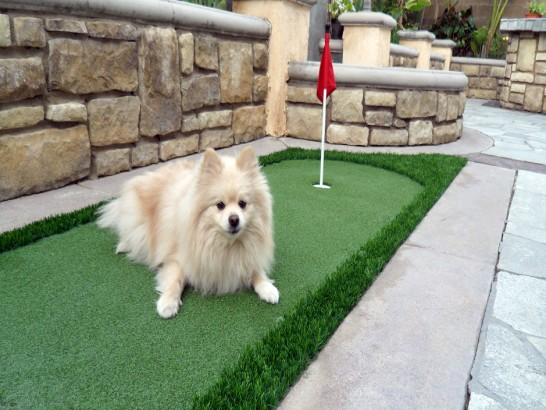 Artificial Grass Photos: Outdoor Carpet La Rue, Ohio Dogs, Beautiful Backyards