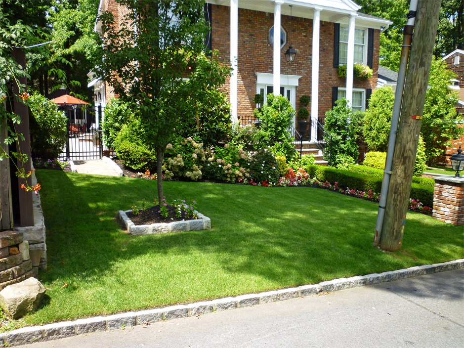 Front yard Landscape idea - trees and arks